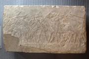 Relief – Esel auf dem Dreschplatz, nach der konservatorischen Behandlung
